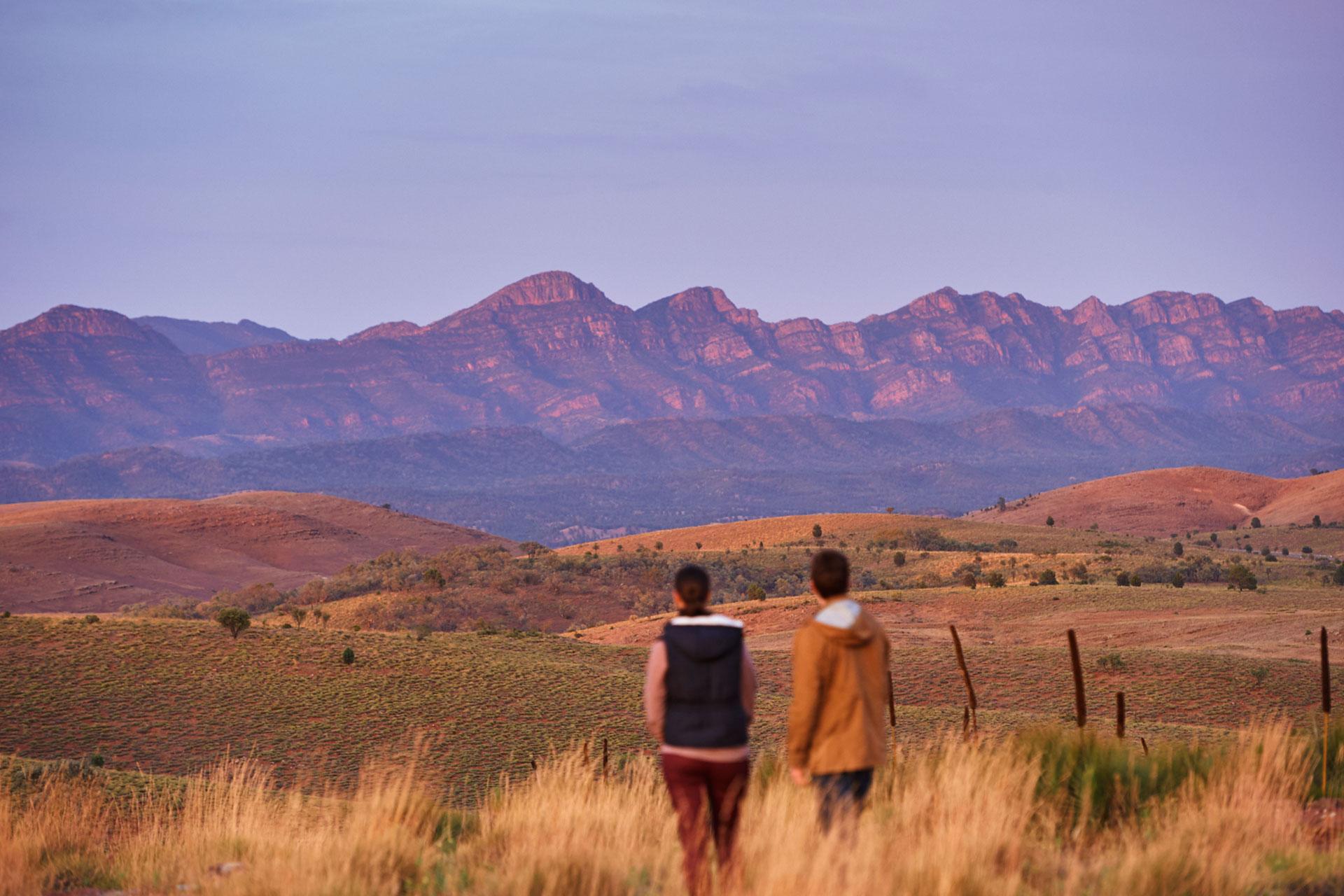 Flinders Ranges Tours Heading Bush